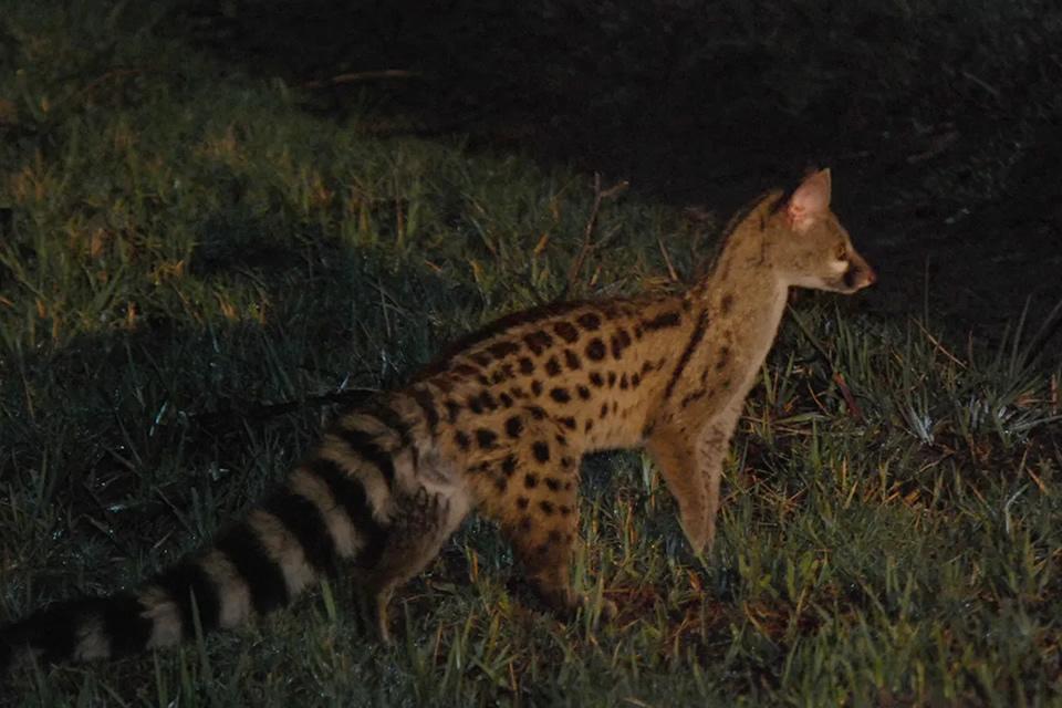 Algerian Wildlife